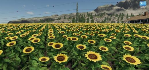 Photo of FS19 – Forgotten Plants – Sunflower/canola V1