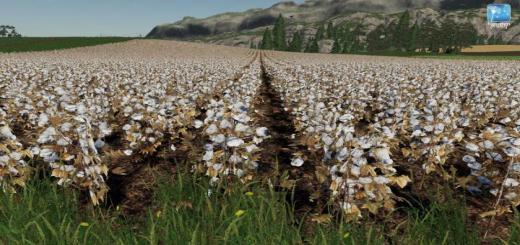 Photo of FS19 – Forgotten Plants – Cotton V1