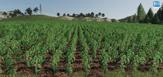 Photo of FS19 – Forgotten Plants – Maize V1