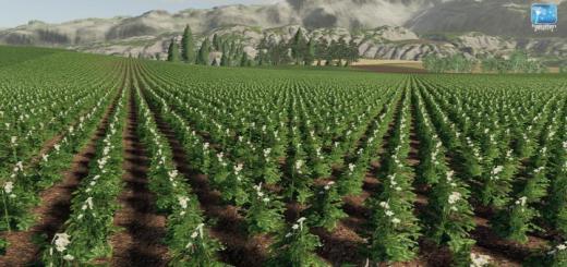 Photo of FS19 – Forgotten Plants – Potato / Sugarbeet / Oilseed Radish V1