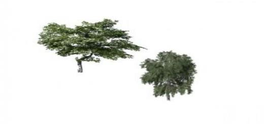Photo of FS19 – Two Placeable Trees V1
