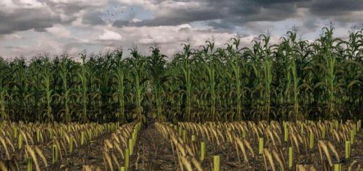 Photo of FS19 – Maize Texture V1